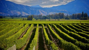 Tasty scene ...The Marlborough wine region in New Zealand.