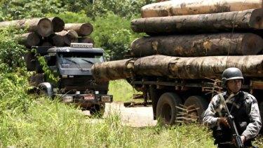 A crackdown on illegal Amazon logging in Brazil last week.