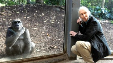 "Jane Goodall at Melbourne Zoo yesterday: ""The cheapest and most efficient way of slowing down global warming is to protect and restore forests."""