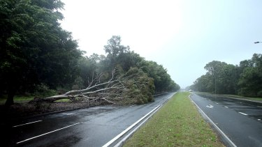 A car reportedly crashed into a fallen tree on Streeton Drive in Canberra on Tuesday.