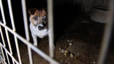 Behind bars at a puppy farm in north-west NSW where conditions were found to be shocking.