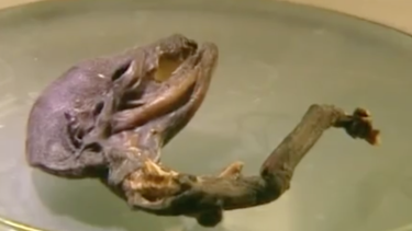"""The """"alien corpse"""" discovered in Russia."""