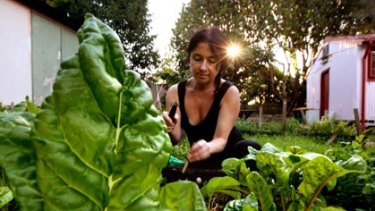 Re-learning skills her grandparents had... Michele Margolis harvests silverbeet from Marrickville's community garden.