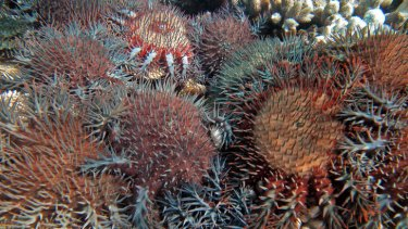 Who's looking at biodiversity? Coral cover on the Great Barrier Reef.