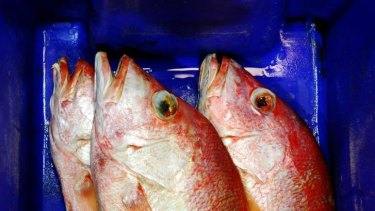 Up to 70 per cent of seafood consumed in Australia is imported.
