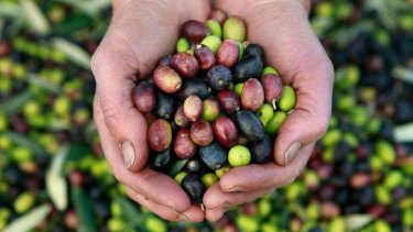 Olives from Chapman Hill New Norcia.