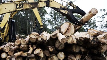 Woodchips and biomass are being put before endangered species, the Wilderness Society claims.