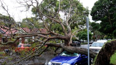 Rainy days and Sundays ... a car was damaged in Cardigan Street, Stanmore.
