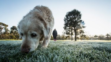 Doggone but it's cold ... Princes Park puts on an icy turn.