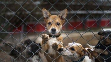 Dogs behind a fence at an animal home in Kloten, Switzerland.