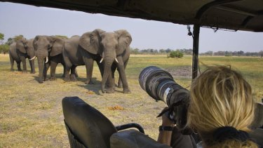 A new study has found elephants can pick up on human cues.