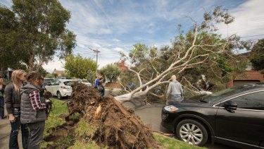 An uprooted tree blocking Rossmoyne Street, Thornbury.