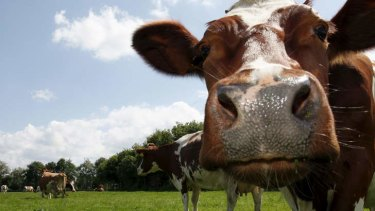 Chinese urbanisation is expected to increase farm exports, including beef.