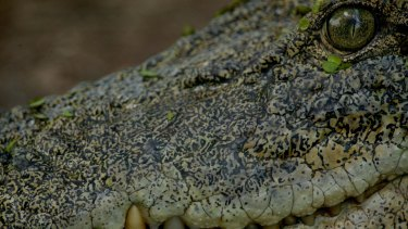 Queensland's crocodile management program will receive $5.8 million over next three years.