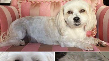 Missing ... clockwise from top, Bella, Lilly, Goldberg and Max