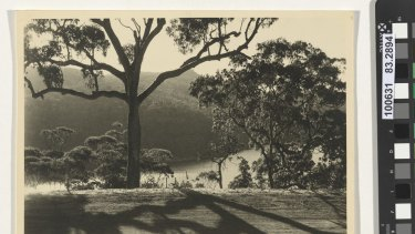 Olive Cotton The patterned road 1938 gelatin silver photograph National Gallery of Australia, Canberra Purchased 1983 gelatin silver photograph National Gallery of Australia, Canberra  Purchased 2012