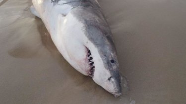 Rising acidity of oceans will be bad news for sharks and other creatures.