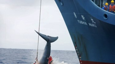 The Japanese government has cut short its controversial Antarctic whale hunt.