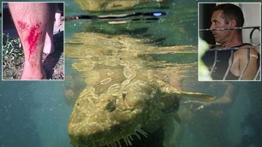 A wobbegong shark  and inset,  Paul Welsh and his gashed leg.