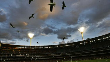 The MCC said it faced an ongoing fight against seagulls.