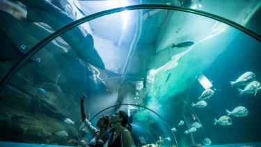 Inside the Manly Sea Life Sanctuary weeks before it closed.