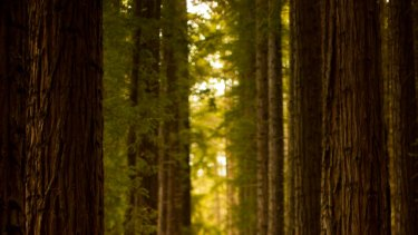 East Warburton Redwood Forest.