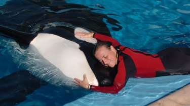 Loved the animals  like her children ... whale trainer Dawn Brancheau performing at SeaWorld, where she was dragged under by a killer whale and drowned.