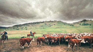 Ground reality … the UN food agency predicts meat prices will be 30 per cent higher in the next decade.