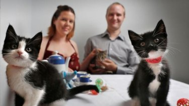 Australia's first cat cafe opened in Melbourne last year.