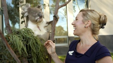 Not welcome … Winston the koala was brought to Parliament House in Canberra yesterday by the Greens senator Larissa Waters to raise awareness about declining numbers of his species. However, the animal was refused entry to the Parliament.
