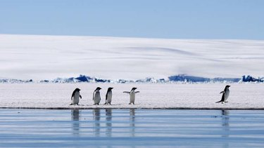 Support is growing to create marine reservations off Antarctica.