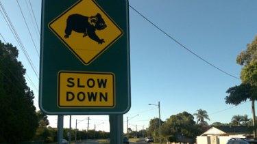 Conservationists say more land must be set aside to ensure the Koala Coast koala lives on.