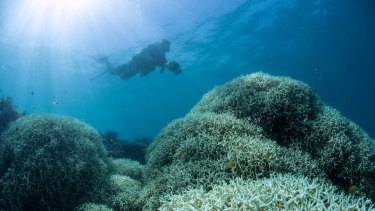 Up to 95 per cent of the northern half of the Great Barrier Reef has already been bleached due to warming oceans.