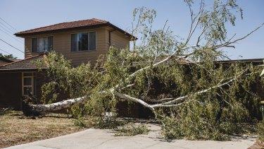 A tree fell in Curtin, damaging a garage.