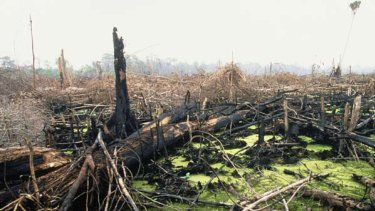 Indonesia wants to combat deforestation, but it can't be used by Australia as a way to circumvent dealing with the real cause of climate change - fossil fuel use.