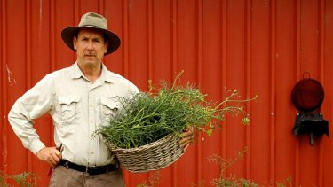 Weed lover ... Steven Adey with a bushel of pig weed.