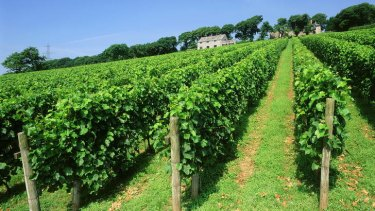 Camel Valley, outside the Cornish village of Bodmin.