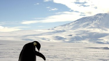 Been there, done that ... an emperor penguin.