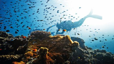 In decline: Diving at the reef off Heron Island near Gladstone in Queensland.