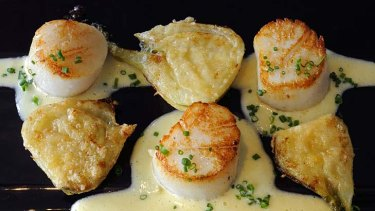 Grilled scallops with paresan fennel.