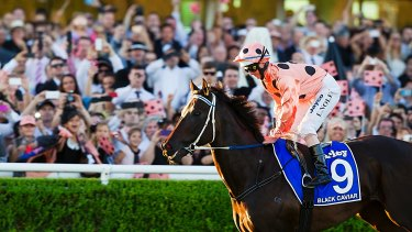 Good pedigree: Black Caviar after her 25th and final win at Randwick in 2013.