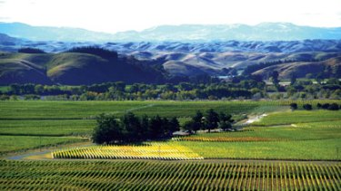 Competitive edge ... the evocatively named Gimblett Gravels are the source of much of New Zealand's great wine.