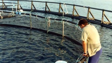 Awash with criticism ... the NSW government rejected claims a fish farm trial off the north coast will pollute the surrounding marine environment and attract sharks.