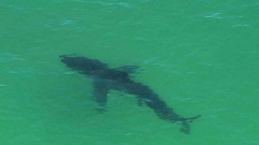 A shark spotted off Byron Bay by a TV news helicopter.