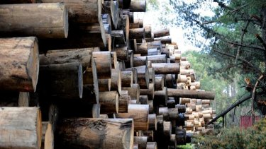 Stockpiles of logs at Neerim South lie in wait for the end of VicForests' contractual dispute.