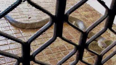 Brown snake outside a Newcastle family's home