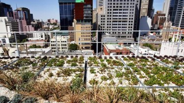 The rooftop garden of the City of Melbourne office building in Little Collins Street.