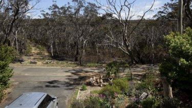 This is now: charred trees on Bettington Road after back burning on Wednesday.