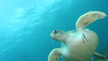 Turtle protections have been dropped for the Adani Abbot Point proposed Terminal 0.