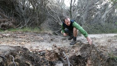 Loved to death: Ian Wells inspects erosion on the Coast Track in the Royal National Park. Wells owns Sydney Coast Walks.